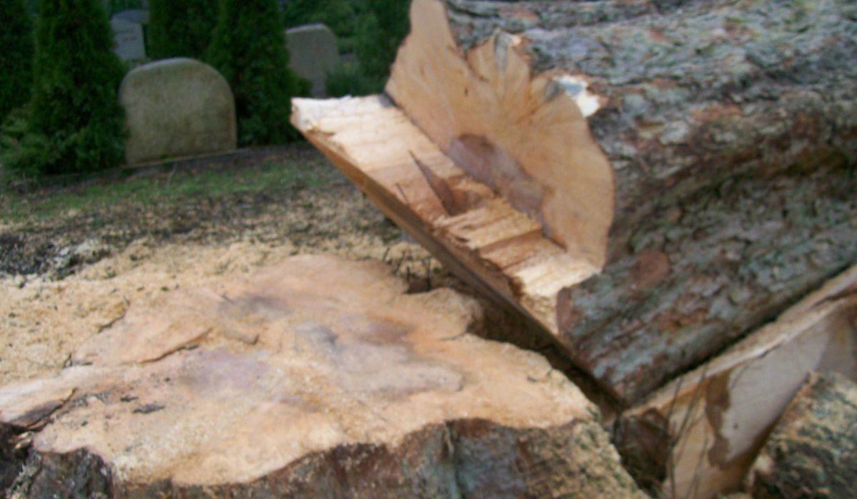 -- Asche zu Asche und Holz zu Klampfen --