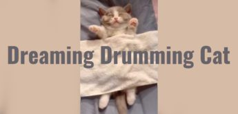 Video: Dreaming Drumming Cat