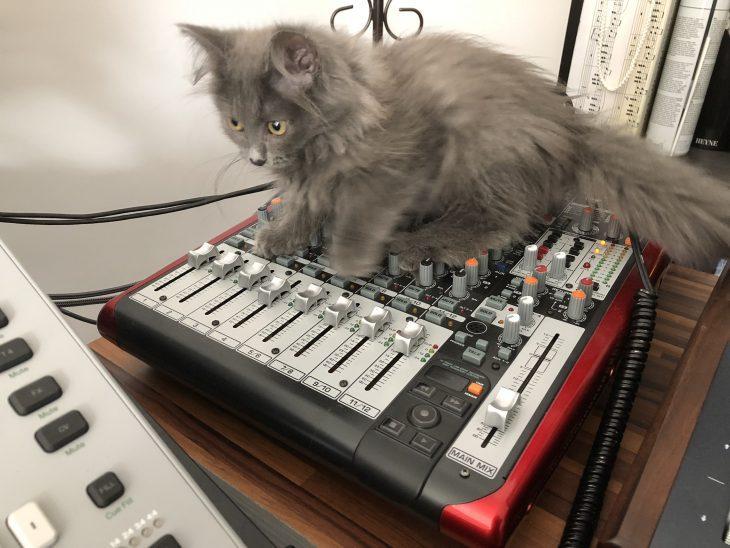 Katze Mixer