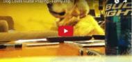 hund-liebt-die-gitarre