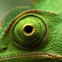 Profilbild von jonas dnlwsk